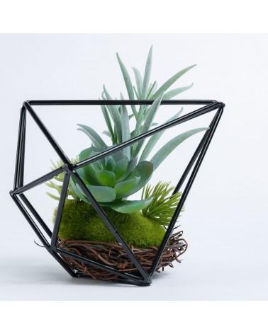 AA3983 ZELENA aeonium plant